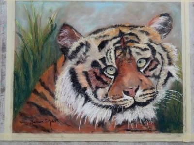 Tigerbudd