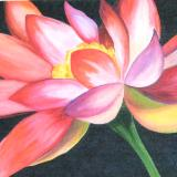 Nancy's Waterlily - SOLD Commission