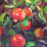 Pomegranate Tree - SOLD