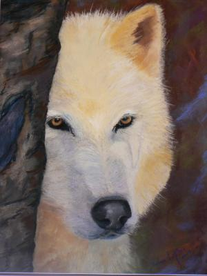 Shy Wolf - SOLD