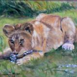 Lion Cub Playtime SOLD